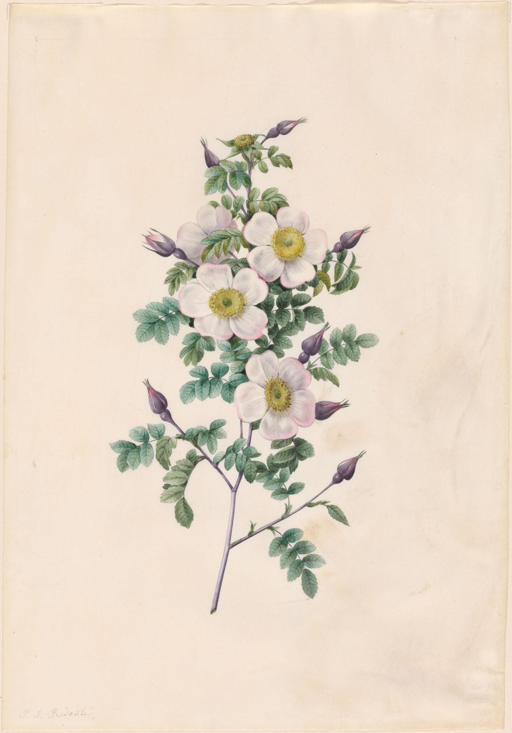 Утро, старинные гербарии картинки