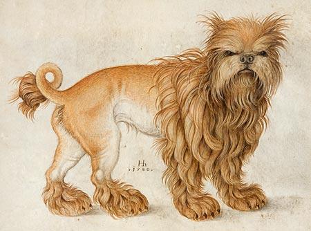 Image of An Affenpinscher