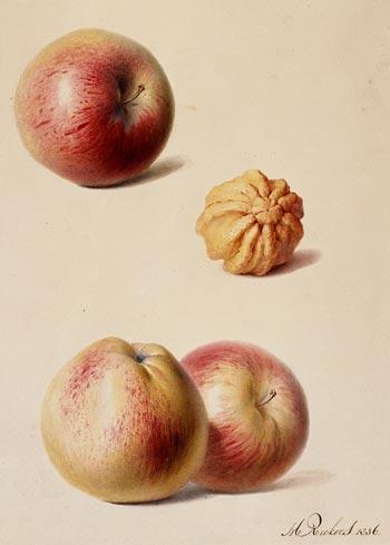 Hendrik Reekers image