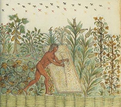 Image from Drake manuscript